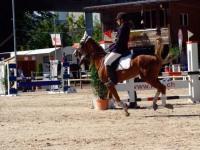 pferdesporttage_2014 (18)