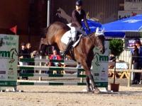 pferdesporttage_2014 (5)