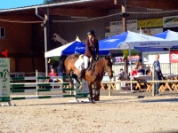 pferdesporttage_2014 (8)