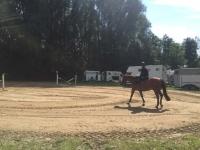 pferdesporttage_2016 (6)