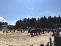 pferdesporttage_2017 (5)