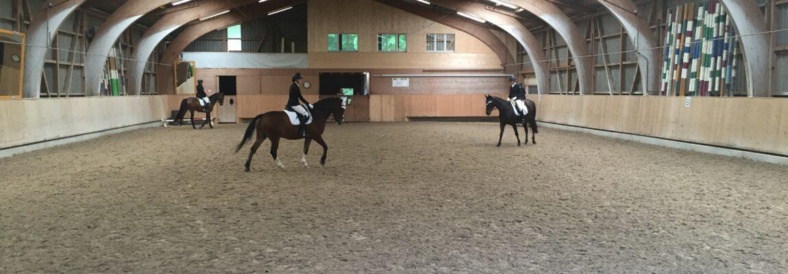 Grundausbildung Pferd: Brevet Kombiniert & Dressur